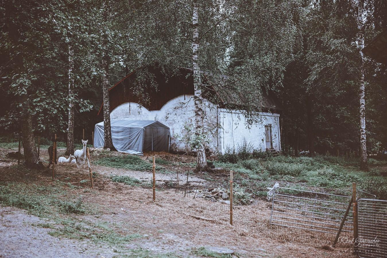 valokuvaaja-salo-haakuvaaja-halikko-mathildedal-emma-josh-3193